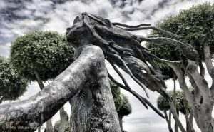 Annie_Wilcox_Photography_travelling_with_a_camera_Gozo_Rabat_Victoria_statues_bus_station