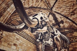 Annie_Wilcox_Photography_travelling_with_a_camera_London_Natural_History_Museum_mastodon_skeleton_Hintze_Hall