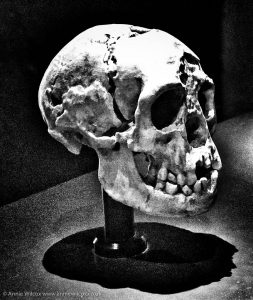 Annie_Wilcox_Photography_travelling_with_a_camera_London_Natural_History_Museum_skullHuman_Evolution